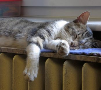 Sleeping in the Heat
